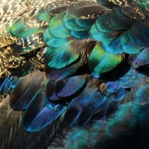 AluArt Colorful Peacock Feathers Woon accessoires Aluminium