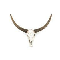 By Boo Ox Head Skull Woon accessoires Kunststof